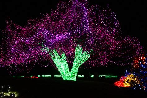 zoo lights seattle wa 36 best images about tacoma sites to see on pinterest