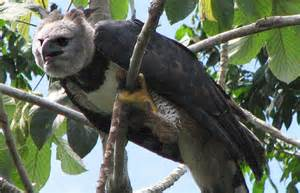 What Animals Live In The Canopy Layer by Amazon Rainforest Canopy Canopy Animals Thinkjungle Com
