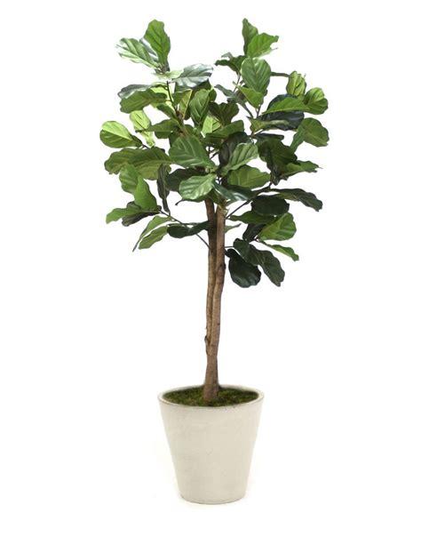 Ballarddesign by Distinctive Designs Fiddle Leaf Tree In Planter Amp Reviews
