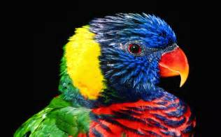 macaw colors rainbow colour parrot inspiration photos