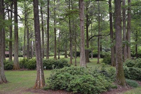 edisto memorial gardens florida hikes