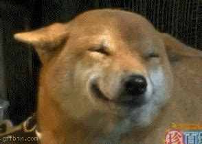 happy puppy gif happy is happy best gifs updated daily
