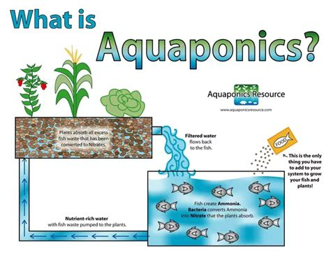 what does how does aquaponics work quora