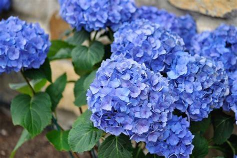nomi di fiori femminili 10 nomi femminili ispirati ai fiori