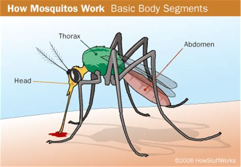 what s that look on your all about faces and feelings books mosquito facts for