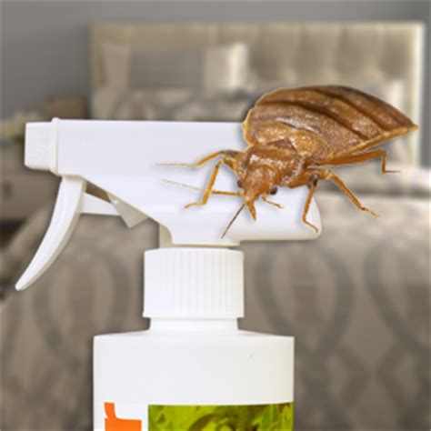 what is the best bed bug killer study identifies most effective natural bed bug killer