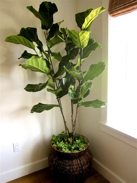 real  artificial house plants classic casual home