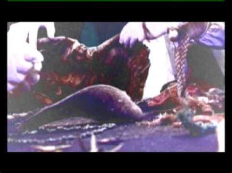 imagenes fuertes muertos torres gemelas los muertos de la torre 2 youtube