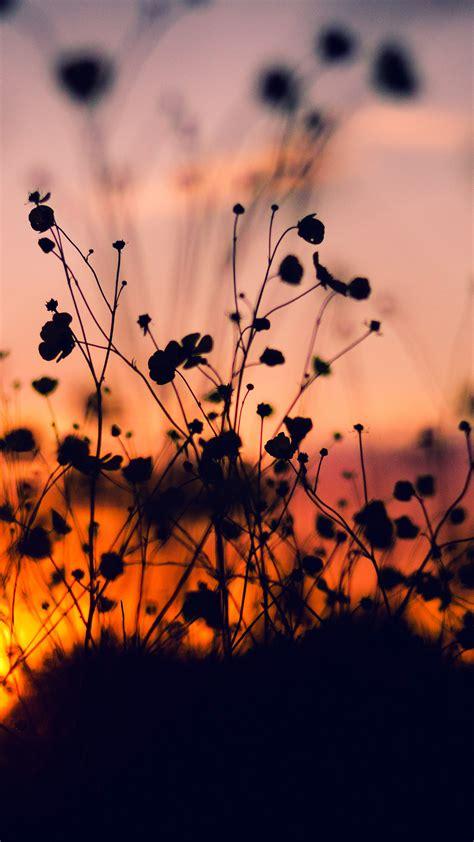 papersco iphone wallpaper mv night nature flower