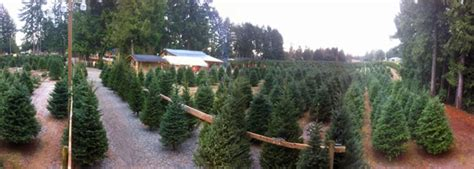 home frostys family christmas tree farm langley bc