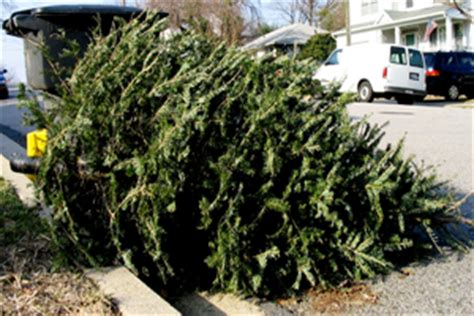 waste management christmas trees tree collection trash recycling