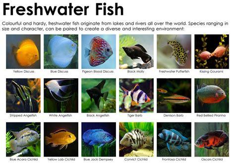 types of aquarium fish 100 types of aquarium fish saltwater aquarium fish