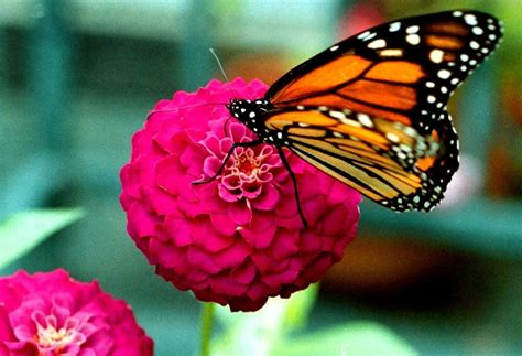 butterfly education  awareness day bead  national awareness days  calendar