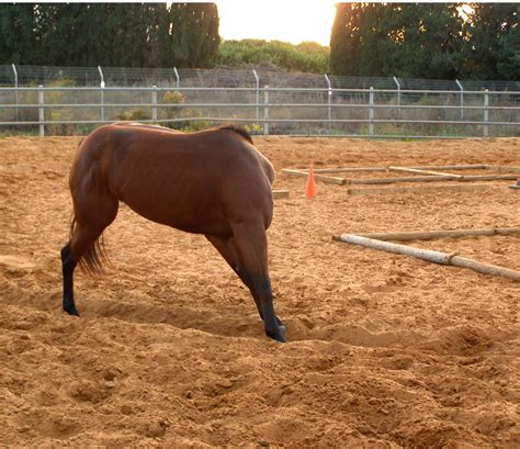 headless horse    horse training ranch  hann flickr