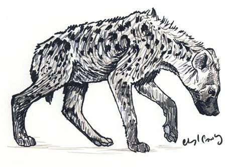 young spotted hyena by silvercrossfox on deviantart