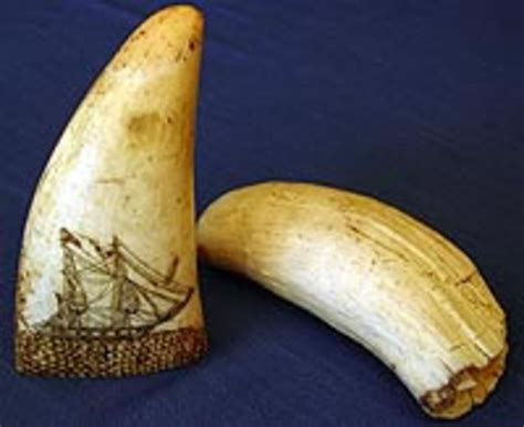 billiken whale tooth whales tooth quot scrimshaw quot cfb94 museum te