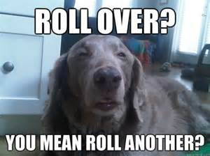 Stoner Dog Meme - 10 funniest stoner dog memes