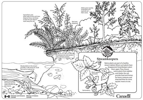 underwater plants coloring pages free underwater plants coloring pages