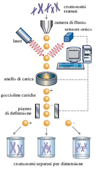 libreria genomica citometria nell enciclopedia treccani