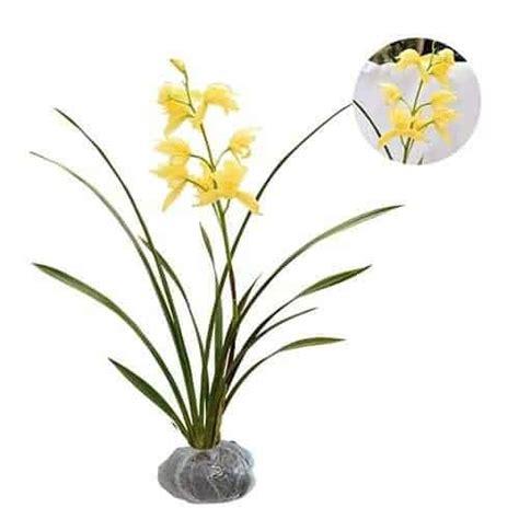 Jual Bibit Anggrek Cymbidium jual tanaman anggrek cymbidium kuning bibit