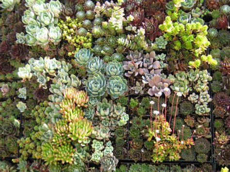 succulent plants world of succulents browse succulents by genus world of succulents