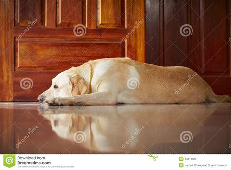 dog house for labrador retriever grooming your labrador retriever dog breeds picture