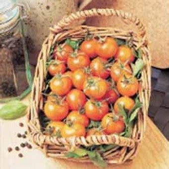 Biji Benih Tanaman Sayuran Tomat benih tomato sungold f1 1 biji non retail bibitbunga