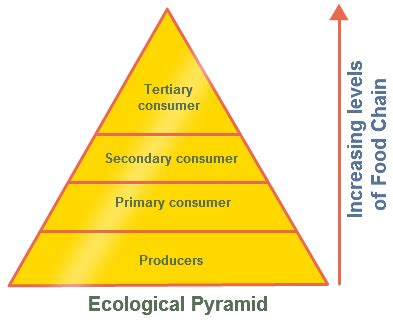 diagram of trophic levels ecological pyramid pyramid of numbers with diagram