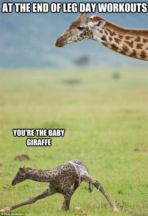 Meme Giraffe - at the end of leg day workouts you re the baby giraffe