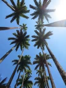 palm trees sky  photo  pixabay