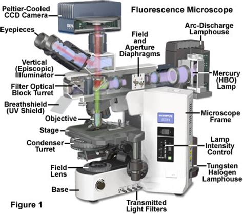 Which Microscope Provides A Right Side Up Image