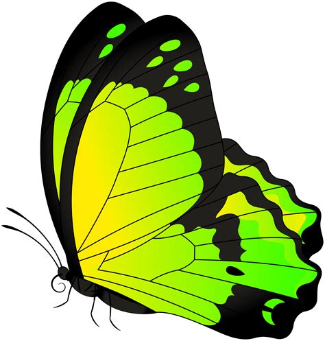 butterfly clip art butterfly yellow green transparent