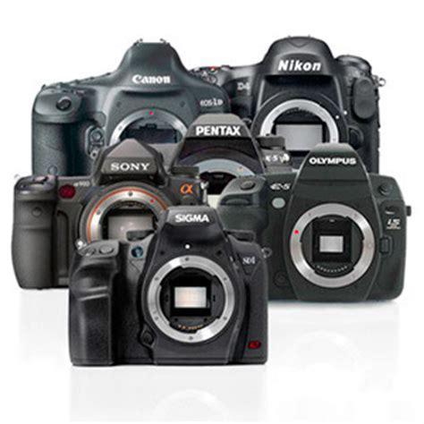 choosing the camera brand | nature images by arthur tiutenko