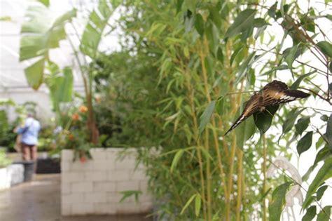 la casa delle farfalle catania la casa delle farfalle a modica 1 di 1 palermo