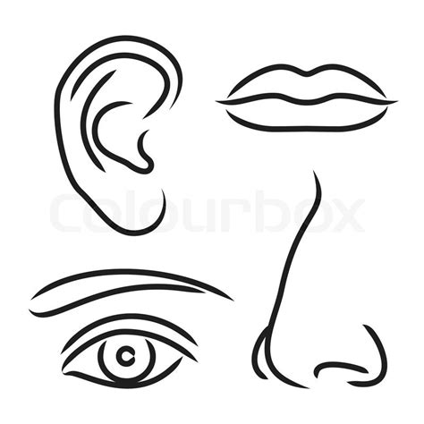printable eyes ears nose and mouth vector illustration nose ear mouth and eye stock