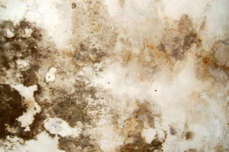 ceiling paint to cover water stains how to cover up water stains on a plaster ceiling