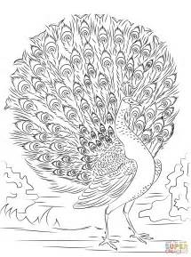 advanced printable free coloring pages art coloring pages
