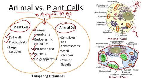 Landscape Structures Parts 30 Human Cell Parts Diagram Structure Parts And