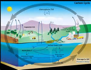 transportation and the carbon cycle