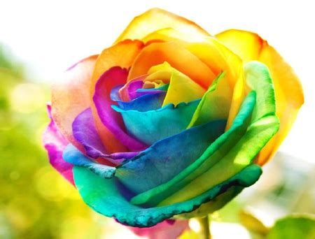 colorful roses colorful roses wallpapers and images desktop