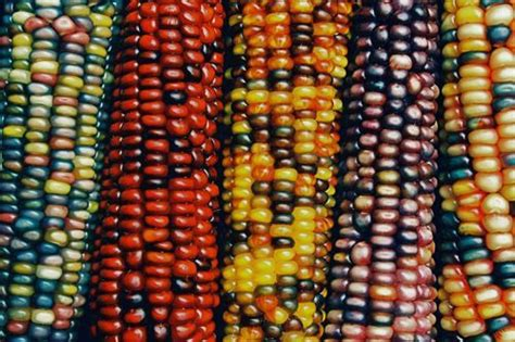 look at those colours indian corn pinterest