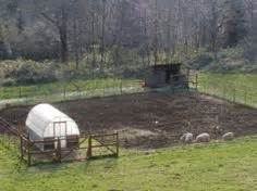 Backyard Pig Farming by Adventures In Building A Biofilter Duck Pond