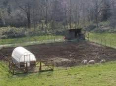 backyard pig farming adventures in building a biofilter duck pond