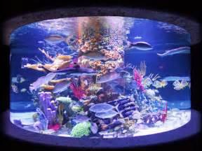living color aquarium top spots to buy an aquarium in south florida 171 cbs miami