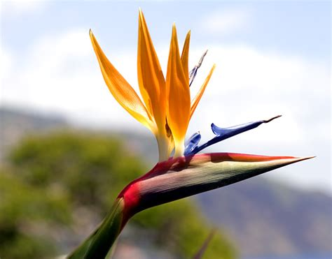 bird paradise flower canada floral delivery blog fun facts about birds of paradise