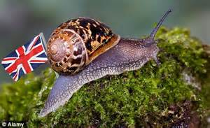 fancy shelling out £1.8m for the only british snail farm