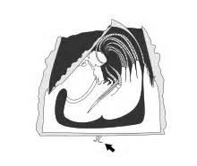 antenna biology
