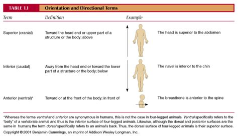 body orientation direction planes and sections ch01 table and figures