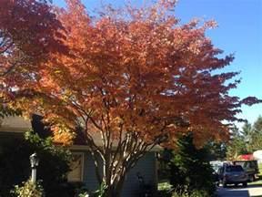 10 best ornamental trees for southeastern pa gardens