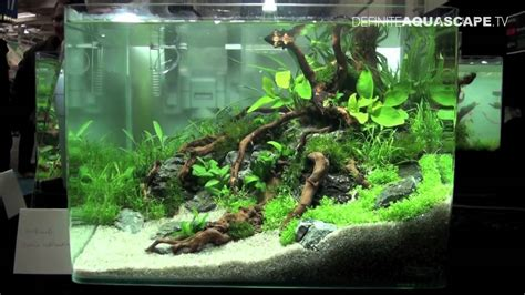 setting aquascape aquascaping qualifyings for the art of the planted